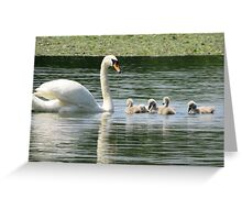 Swan and Cygnets Greeting Card