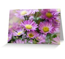 Aster Flowes Greeting Card