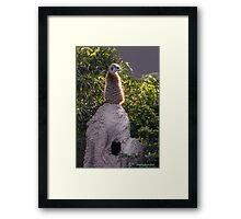 Meerkat in the Sunshine...King of the Castle! Framed Print
