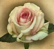 Victorian Blush by RC deWinter
