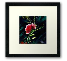 Red Flower New Framed Print