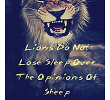 Lions Do Not Lose Sleep Over The Opinions Of Sheep Photographic Print