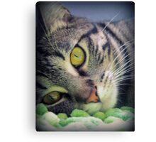 Adorable Kitten Canvas Print