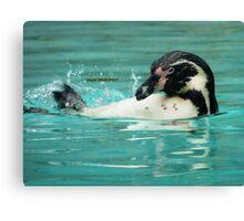 Penguin swimming  Canvas Print