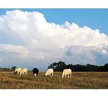 On A Summer Afternoon In The Country Photographic Print