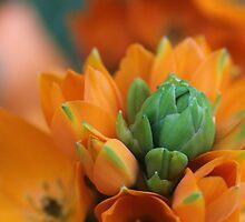Orange Star by aprilann