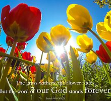 Isaiah 40:8 by willgudgeon