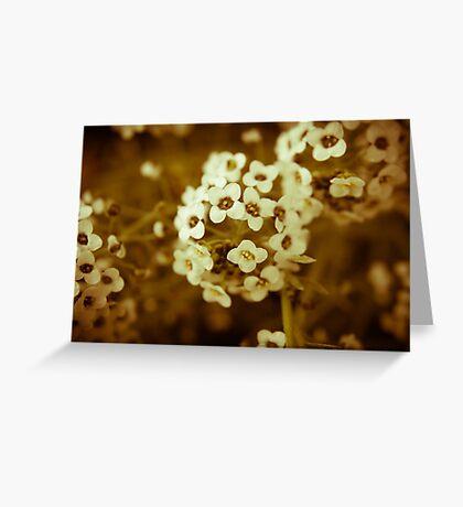Macro Flowers Greeting Card