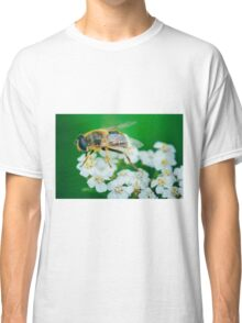 Bee on a white flower macro Classic T-Shirt
