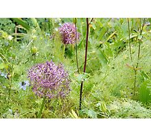 My Favourite Kind Of Garden......Dorset. UK Photographic Print