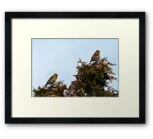 Competiton in song Framed Print