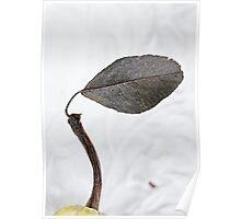 One Leaf Poster