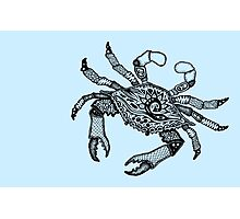Crab Three Photographic Print