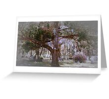 Tree of Ages Artistic Unique Photograph Home Decor Greeting Card