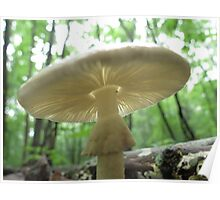 Agaric Poster