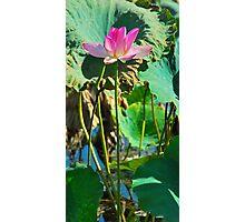 Fogg Dam Lily Photographic Print