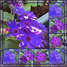 Cinerarias Dreaming -  Floral Collage in Purle and Blue by BlueMoonRose