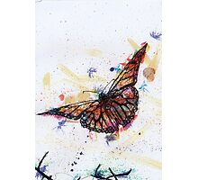 Scribble Ink Butterfly Photographic Print