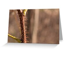 Spikey Plant Greeting Card