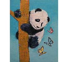 Panda Butterflies Photographic Print
