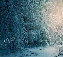Winter Wonderland by alyphoto