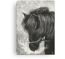 Noble Head Canvas Print