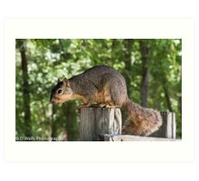 Squirrel sitting on top of a post Art Print