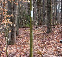 October Mountain Appalachian Trail by CapeCodGiftShop