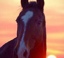 Lemon Sky, Chocolate Horse by Penny Kittel