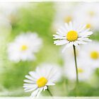 Summer Time Daisies by Natalie Kinnear
