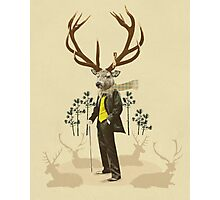 King stag Photographic Print