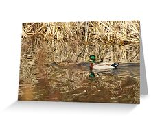 Perfect Camouflage  Greeting Card