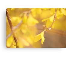 Yellow Morning Canvas Print