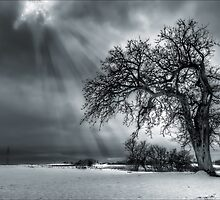 Winter Tree. by eXparte-se