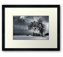 Winter Tree. Framed Print