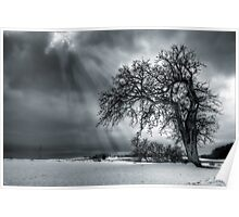 Winter Tree. Poster