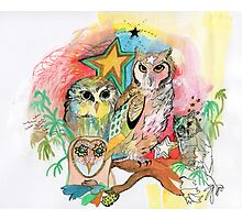 Owls and Stars Photographic Print