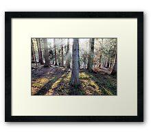 Morning Light. Framed Print