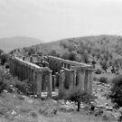 Temple of Apollo Epicurius, Bassae, Greece  by Priscilla Turner