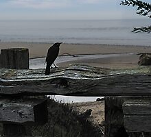 Bird on a fence at Carmel Beach by Yukondick