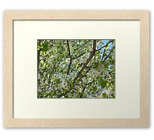 Flowers at the Peak of Spring Framed Print