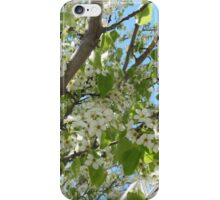 Flowers at the Peak of Spring iPhone Case/Skin