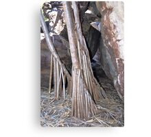Rock Pandanus, Arnhem Land Canvas Print