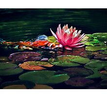 Koi attacks lily! Photographic Print