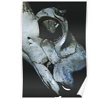 Taxidermy Goat Skull Print5 Poster