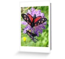 Two black and white butterflies Greeting Card
