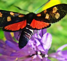 Cool black butterfly with red polka dots by fotosbykarin