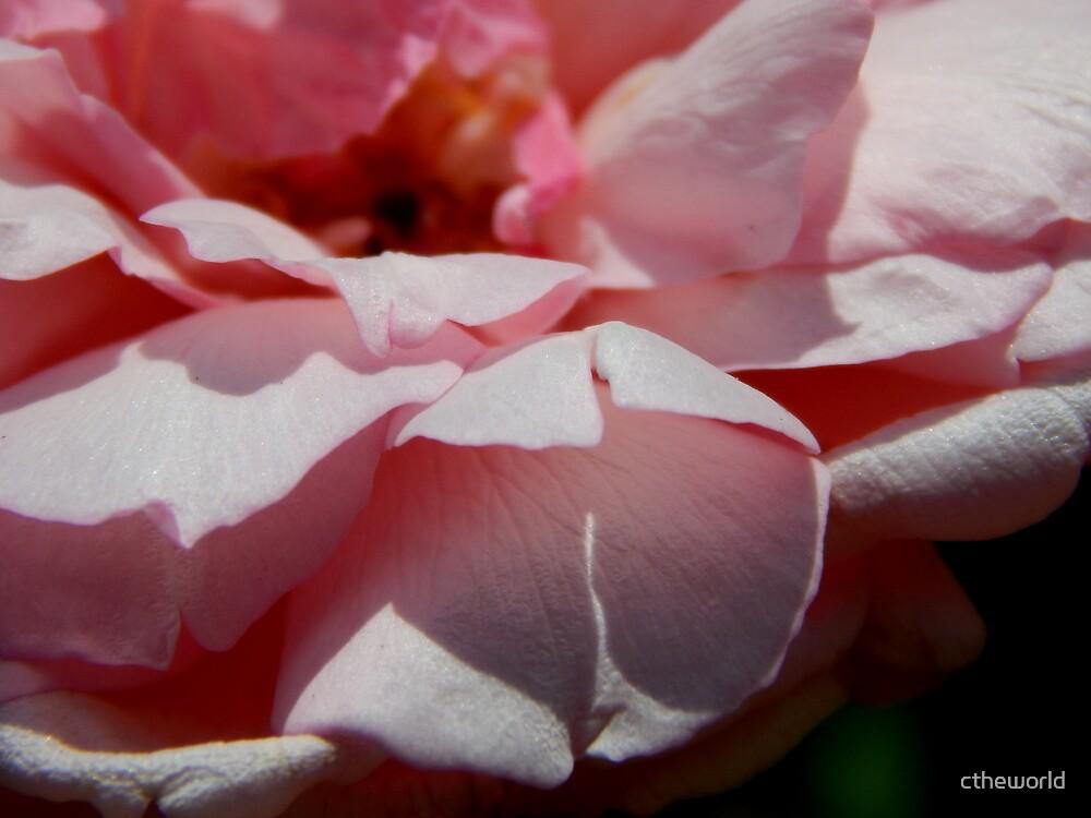 Rose Garden Series ~ 5 by ctheworld