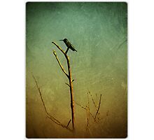 humming still Photographic Print
