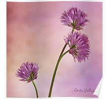 Chive Blossoms Poster